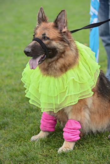 Dog in ballerina costume