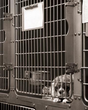Sad dog in kennel