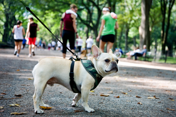 Dog in NYC
