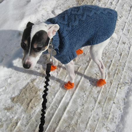 Dog in orange booties