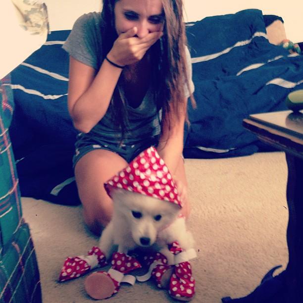 Dog in polka dot rain gear