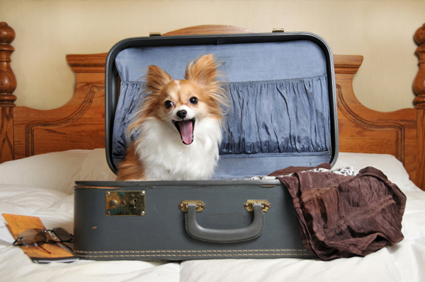 Dog in suitcase