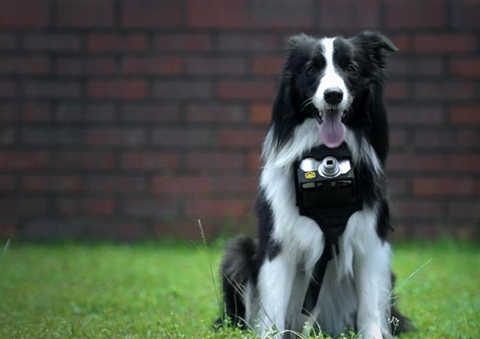 Nikon's new dog camera lets pups