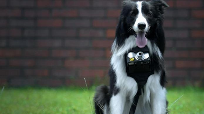 Nikon's new dog camera lets pups