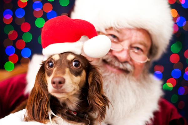 Dog and Santa photo
