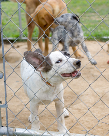 Happy dogs in kennel