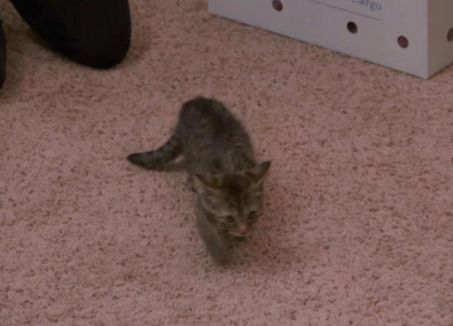 Douglas Family Kitty