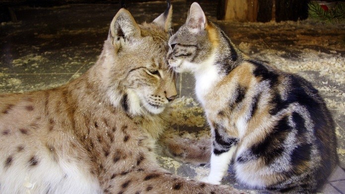 12 animals who aren't afraid to