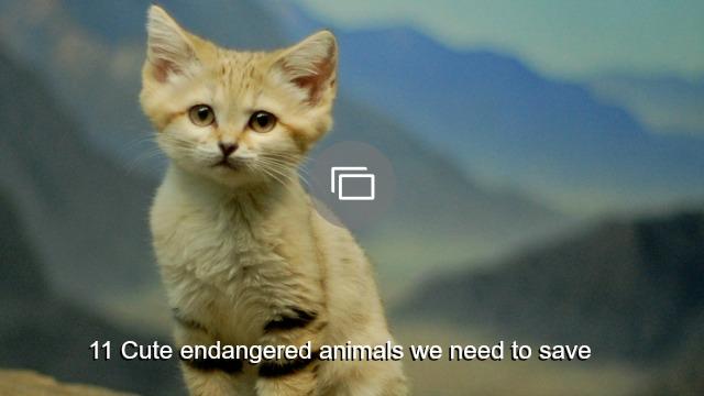 Endangered animal slideshows