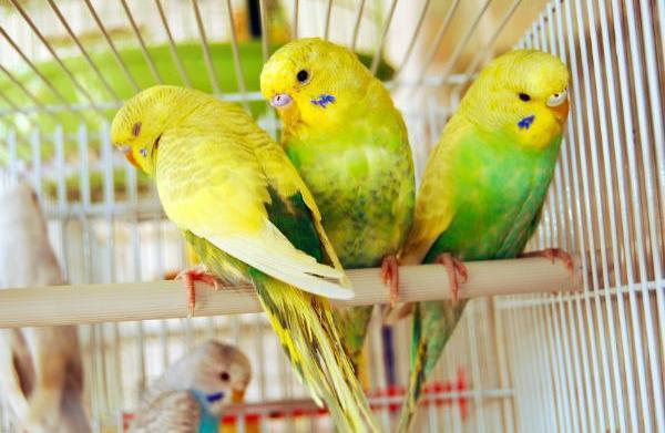3 Animals that make surpisingly great