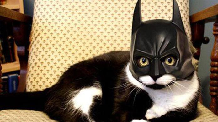 Hilarious cats dressed up like superheroes