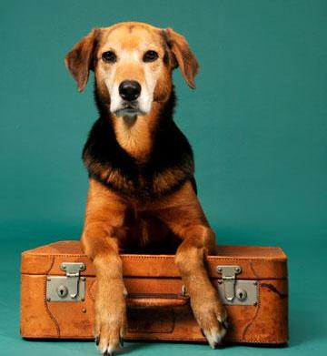 Come, or stay: Should your pet