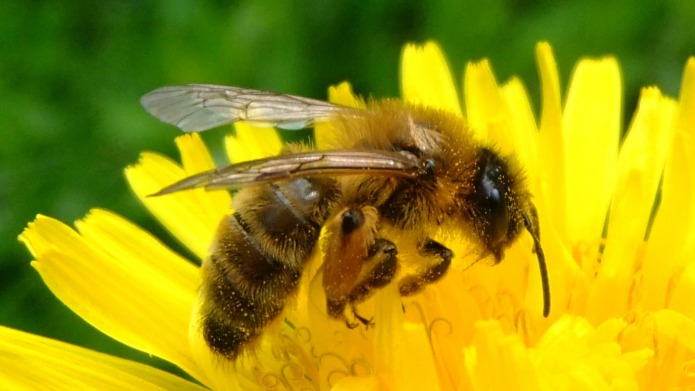 Join the Great British Bee Count