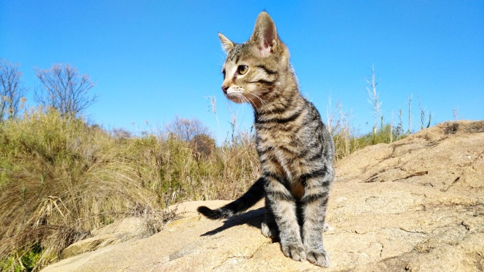 16 adventurous cats that prove the