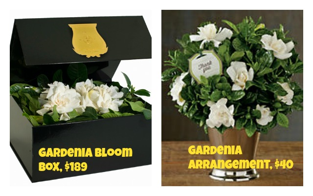 gardenia gift set