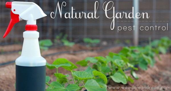 homemade plant pest control