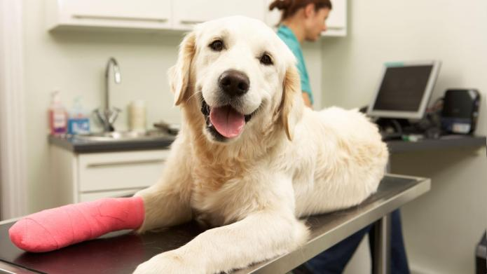 Best pet insurance plans and options