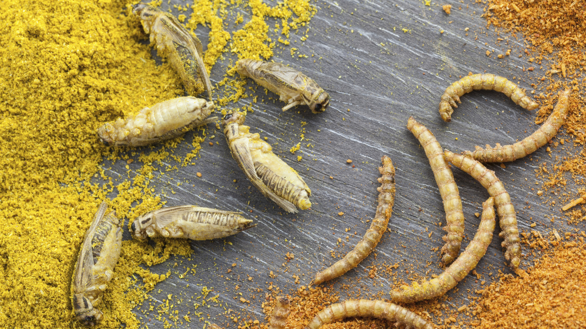 Grasshopers and mealworms