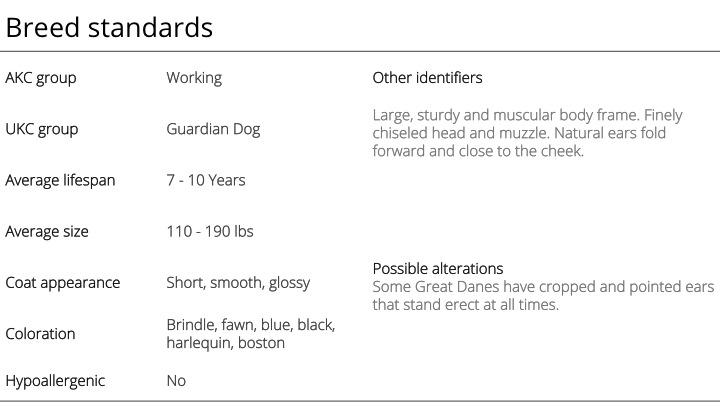 great dane breed standards