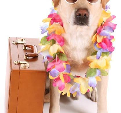 Luxury travelers and their pampered pets