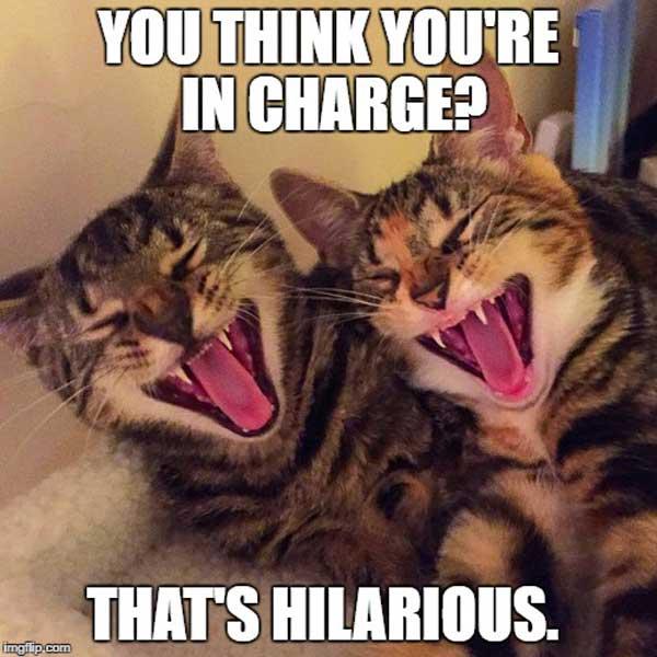 laughing-cat-meme