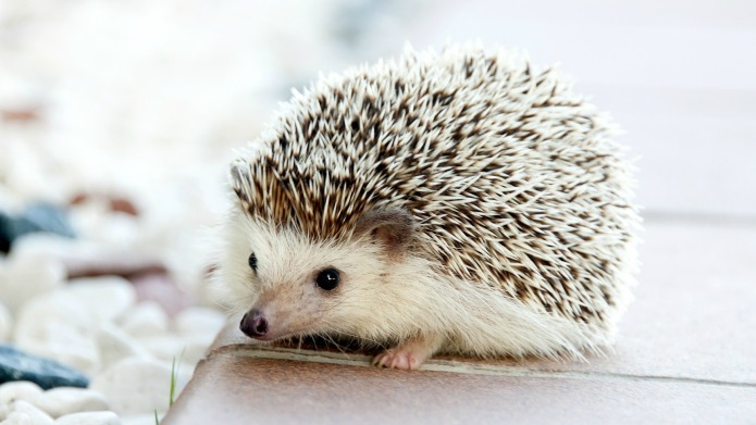 6 Reasons hedgehogs make the perfect