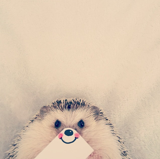 hedgehog with drawn on smile