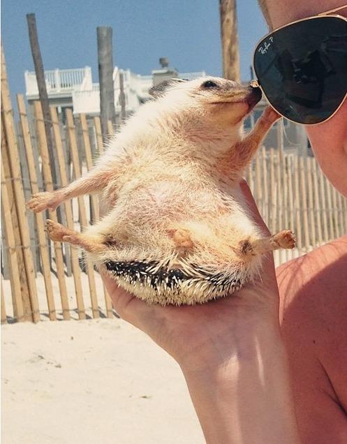 girl holding hedgehog