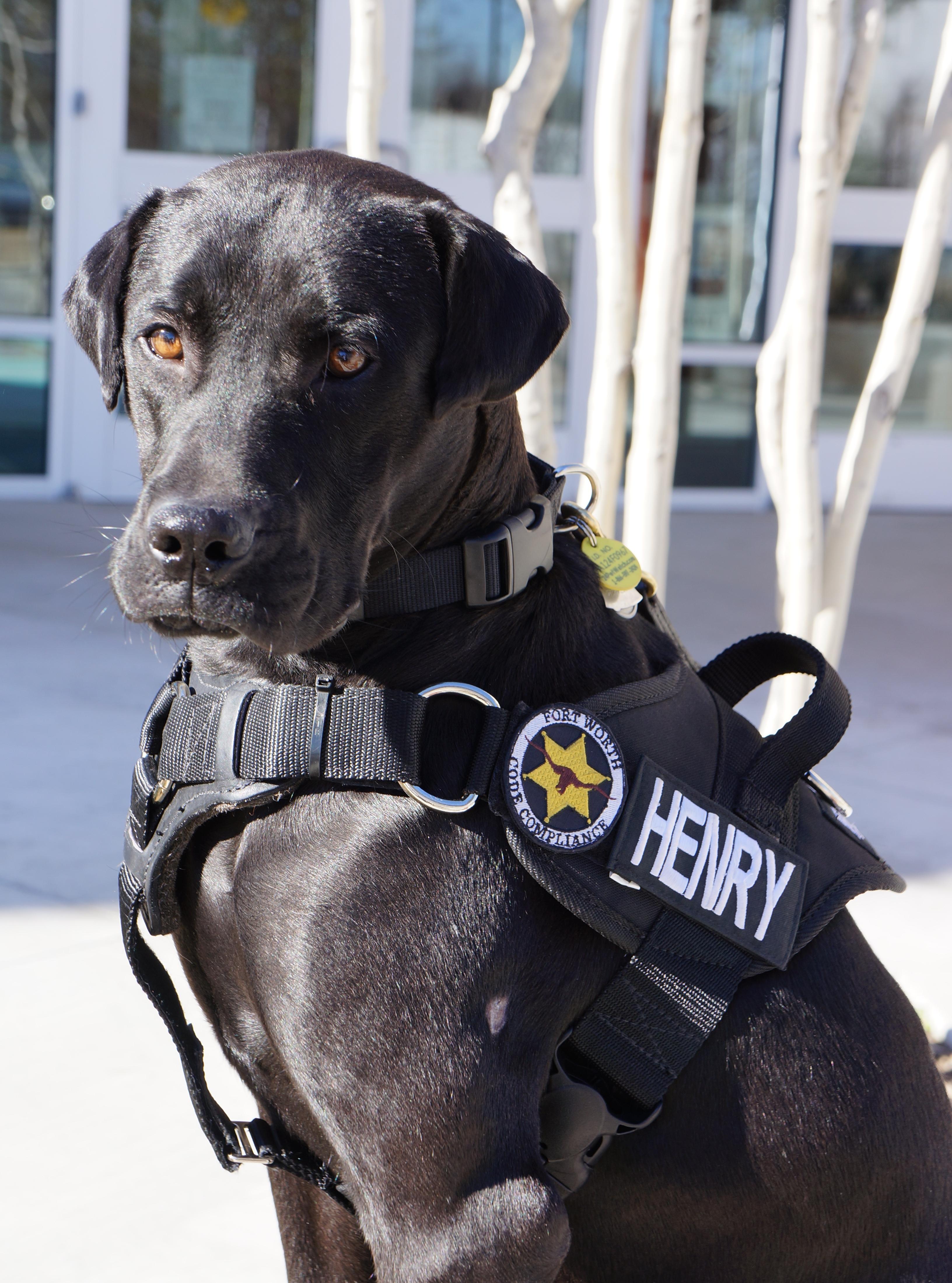 Henry the dog