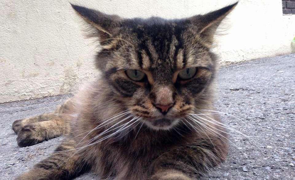 Humbert the cat