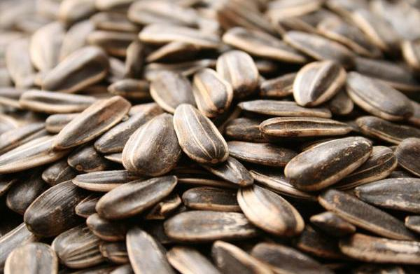 5 Healthy seeds you should be