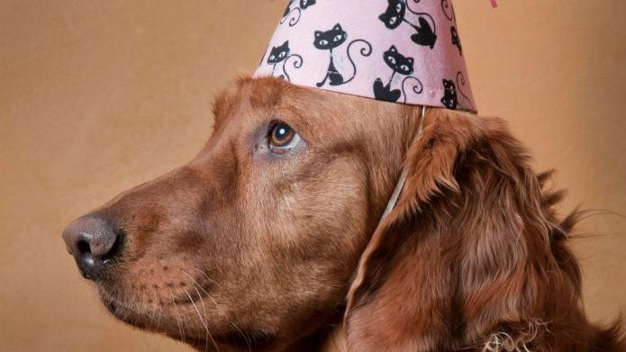Playful themes for your pup's birthday
