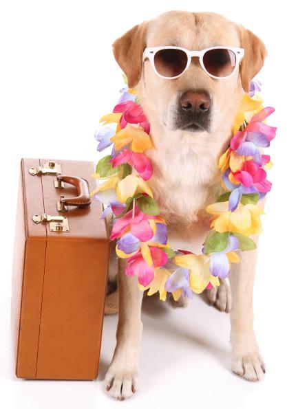 Isolated travel dog