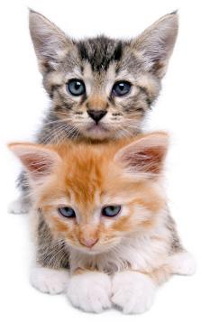 Isolated kittens