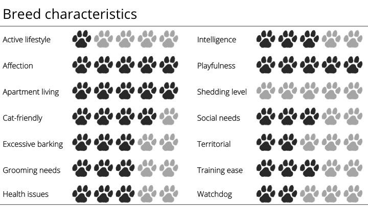 italian greyhound breed characteristics