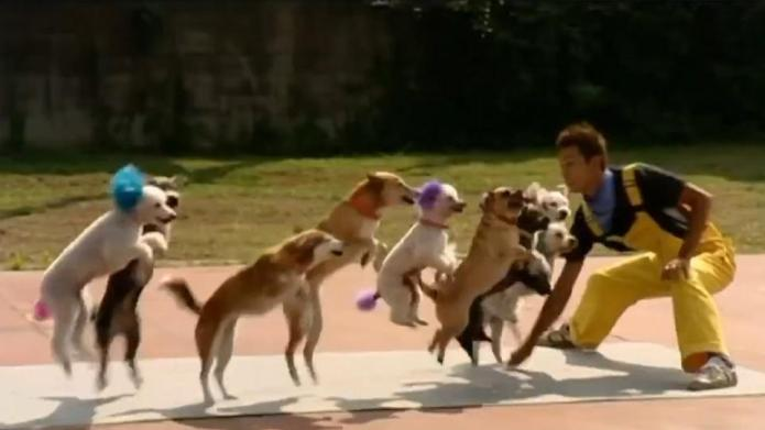 13 Dogs team up for jump