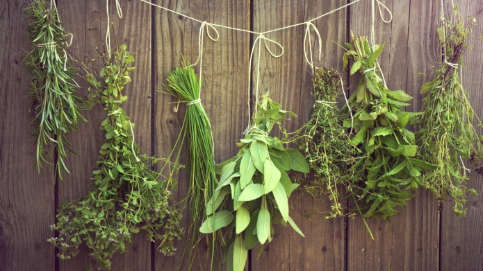 Herb bunches hanging on rope against
