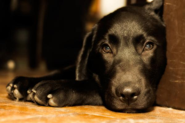 Pet separation anxiety: 4 Tips to