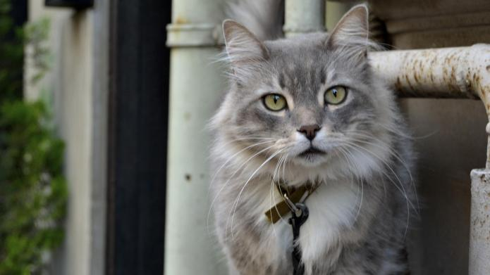 Meet the cat that marches like