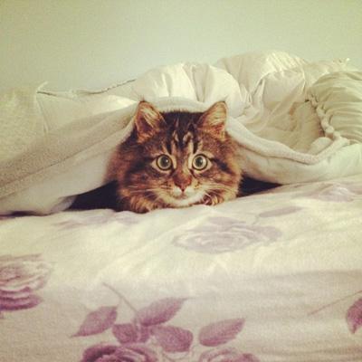 Cat playing peekaboo