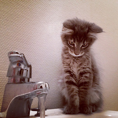 Cat staring at water