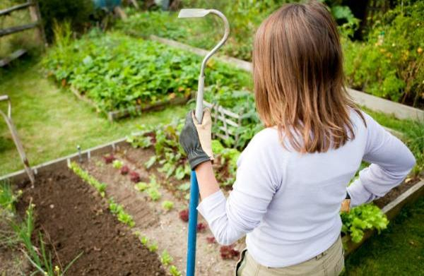 Maximizing space in your garden