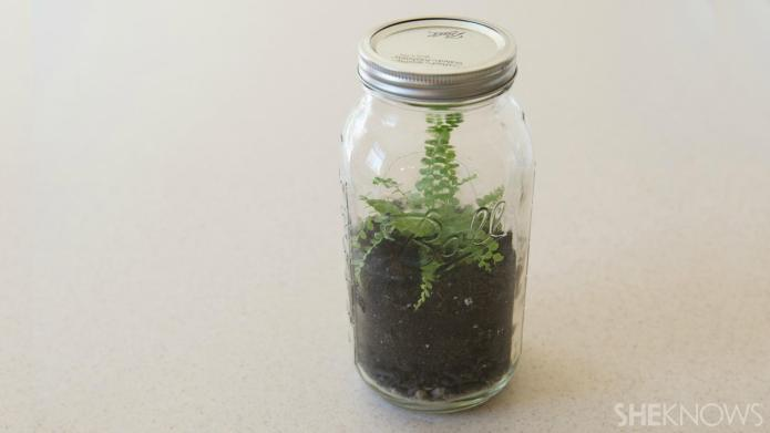 How to make a terrarium with