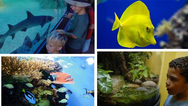 La Jolla Aquarium
