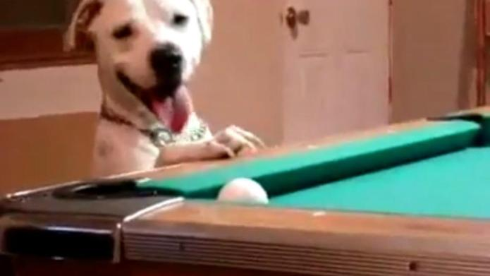 This dog really loves to play