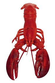 Lobster | Sheknows.ca