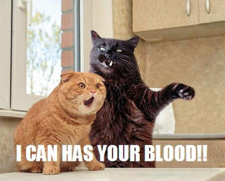 LOL Cats: Fight for what you believe in