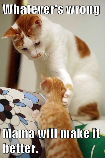 LOL Cats: You're never too old for your mommy