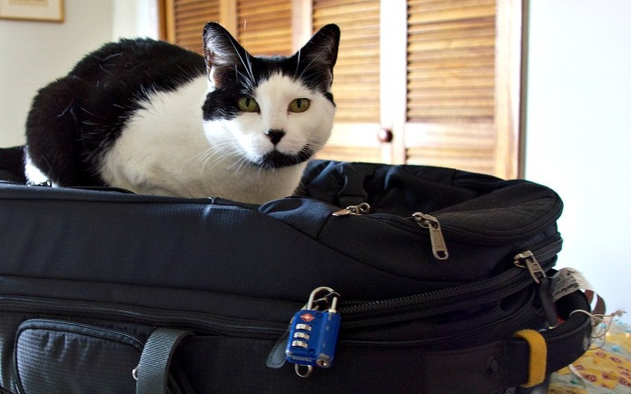 Tips for traveling with cats to