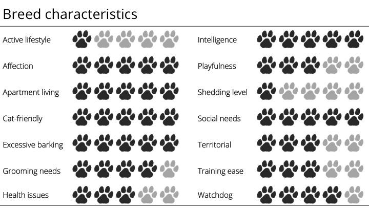 maltese breed characteristics